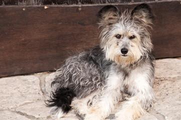 Likeable shaggy stray dog on stone pavement