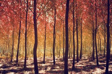 Autumn Scenics