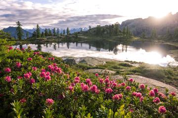 Alba su fiori e lago di montagna