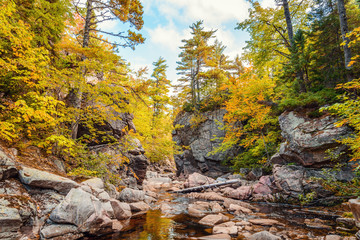 Trees growing on rocks above stream