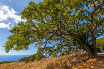 Huge tree on the coastline