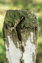 altes Holz 2
