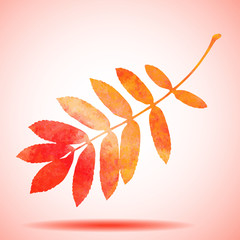 Orange watercolor painted vector rowan tree leaf