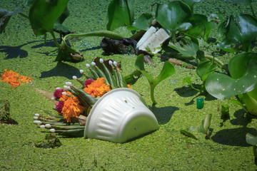 Garbage in the river / foam with Hyacinth.