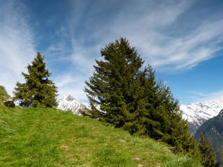 Landschaft im Grünen