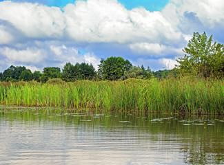 The reed lake