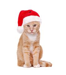 red cat wearing santa hat