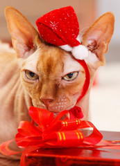 Cat with Santa Claus red hat - Stock Image