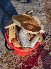 bucket of mushroom picker