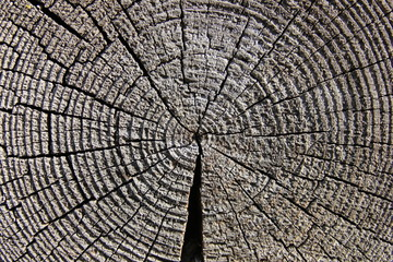 Wood_log