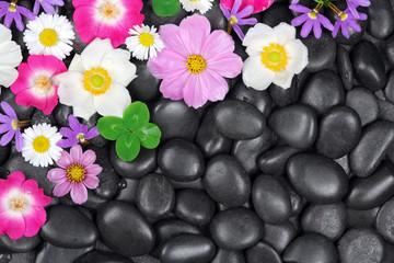 Flowers on stone background
