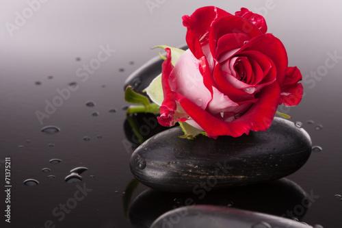 zdroj-kamien-i-wzrastal-kwiatu-wciaz-zycie-pojecie-opieki-zdrowotnej