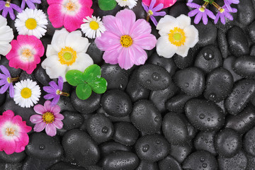 Stones with  flowers and waterdrops