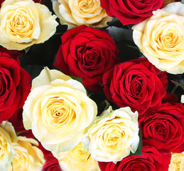 Yellow and red rose