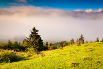Colorful summer morning in the Triglav national park Slovenia, A