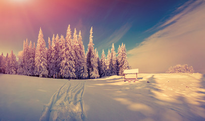 Panorama of the winter sunrise in the forest