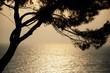 canvas print picture - Sonnenuntergang Baum