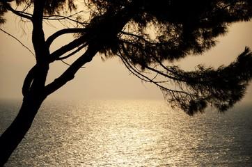 Sonnenuntergang Baum