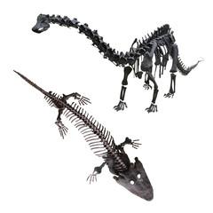 dinosaur's skeleton