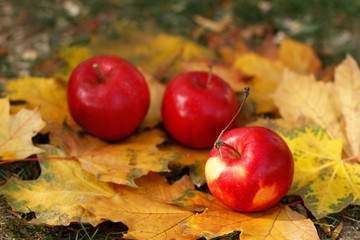 Autumn, fallen apples and leaves