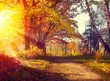 Fall. Autumnal Park. Autumn Trees and Leaves in sun light