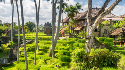 View of countryside in Bali