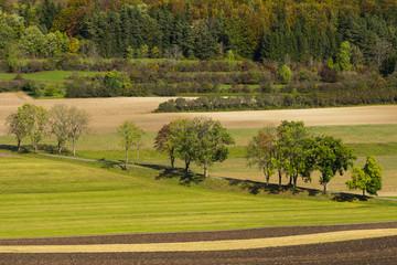 Auf der Schwäb. Alb - Bäume entlang eines Feldweges