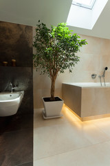 Lucky tree in the bathroom