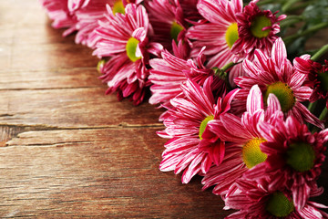 Purple chrysanthemum on wooden background