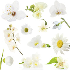 Collage of beautiful white flowers