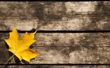 Yellow Maple Leaf Background