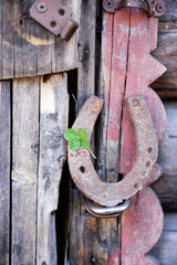 Old horse shoe with clover leaf on wooden door outdoors