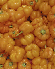 orange bell peppers closeup