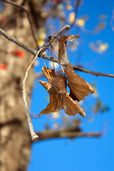 the old leaves