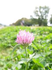 川辺の花1