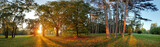 Panorama of Summer - autumn tree in forest park - 71390073
