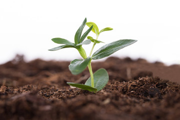 Sapling representing business growth