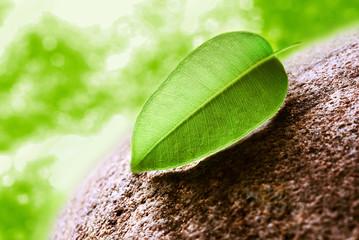 Green tea leaves on stone