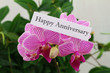 Happy anniversary card with pink orchid