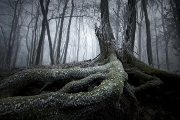 tree with twisted roots in a dark frozen forest