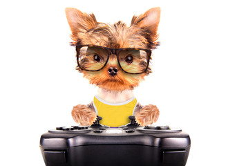 dog wearing a shades play on game pad