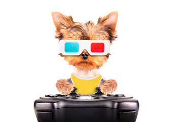 dog play on game pad