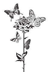 monochrome design of butterflies and rose