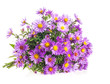 Bouquet Purple autumn flowers isolated on white background