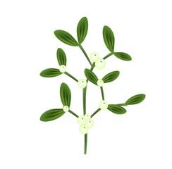 Twig of mistletoe