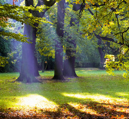 God beams in Park
