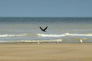 cormoran sur la plage
