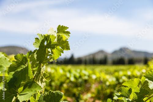 Papiers peints Culture Provence vineyard