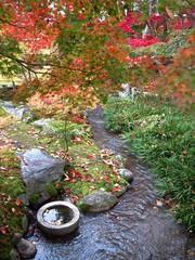 秋の紅葉 足元の落ち葉