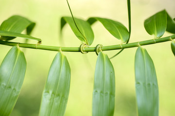 spiral green leaf